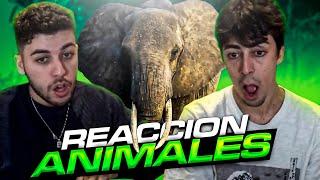 REACCIONANDO a VÍDEOS de ANIMALES ft. Nil Ojeda | Werlyb