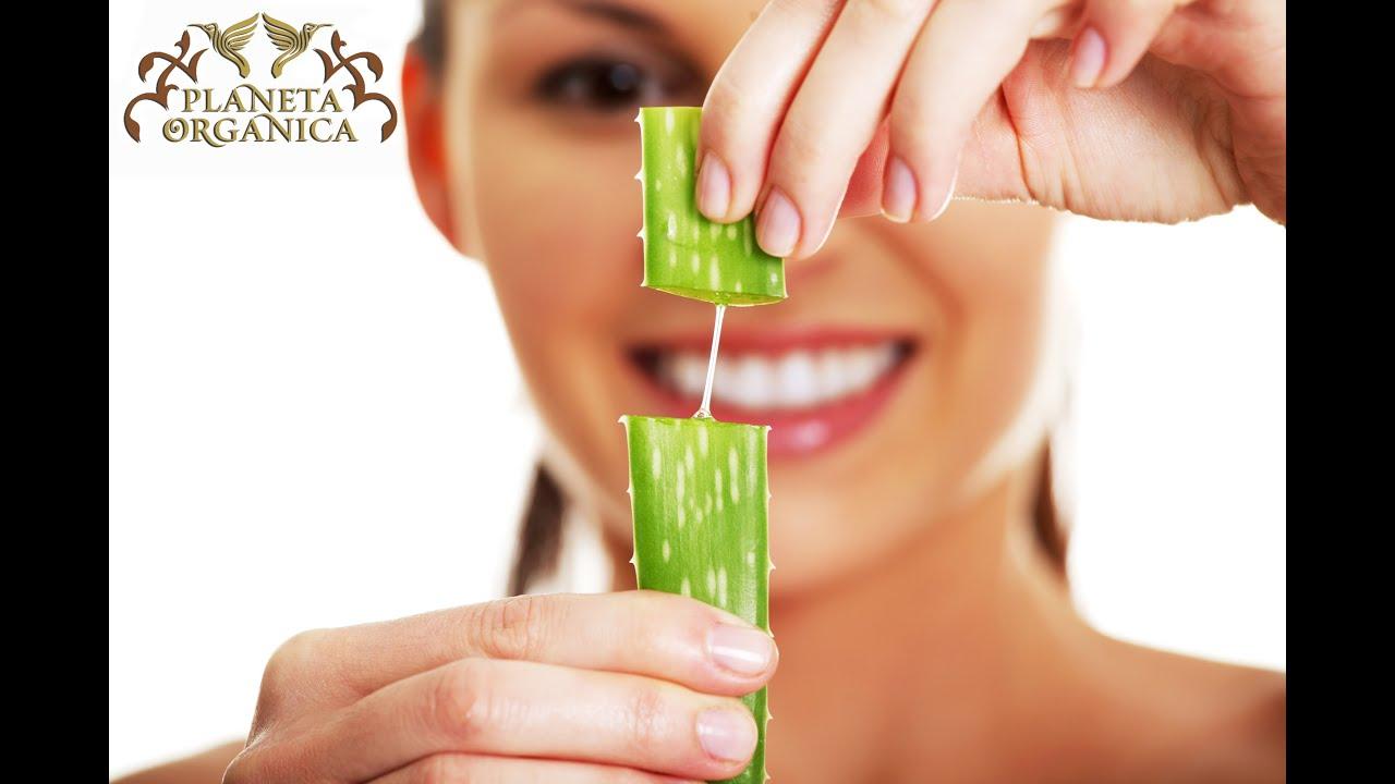 Сок алоэ для кожи лица: натуральная эффективная альтернатива дорогостоящей косметике рекомендации