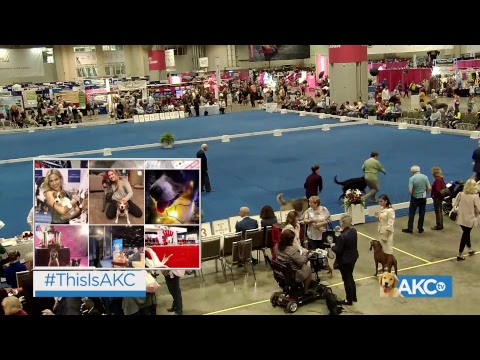 AKC.TV Live From Orlando