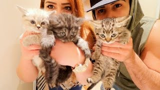 SOMEONE SURPRISED ME WITH KITTENS!!!!