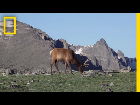 What Are Tundras? | National Geographic