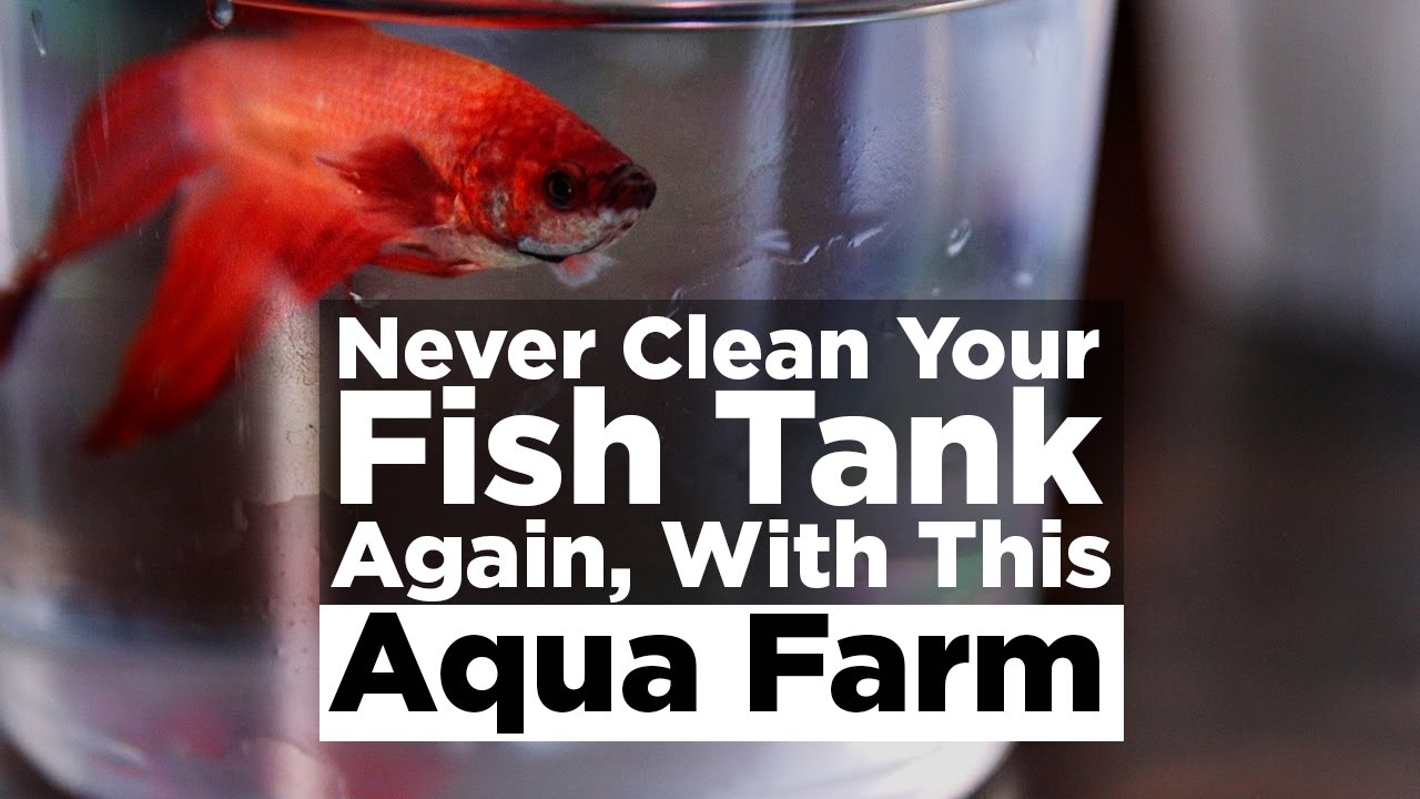 Fish tank you never have to clean - Never Clean Your Fish Tank Again With This Aqua Farm