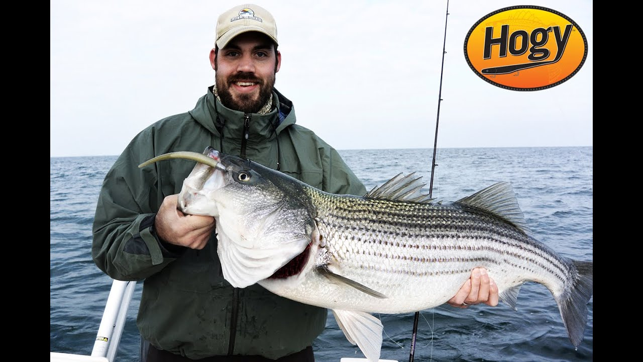 Winter chesapeake bay striped bass fishing doovi for Striper fishing chesapeake bay