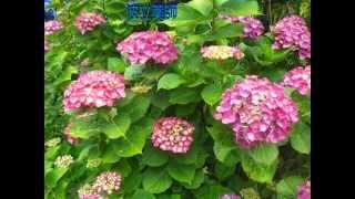 ㊵武士道Bushido100「武士道ルネサンス」 「子どもは国の宝、国が守る。...