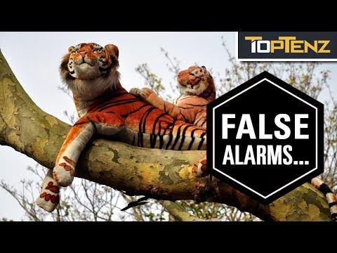 Top 10 Panics Caused By Stuffed Animals
