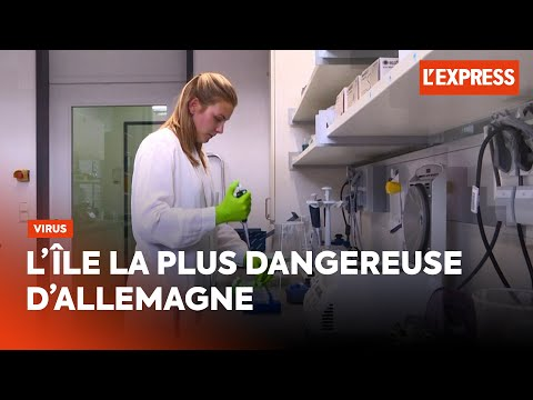 L'île la plus dangereuse d'Allemagne abrite des centaines de virus