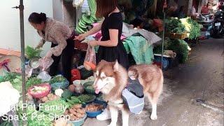 Mật đảm đang đi chợ mua đồ về nấu ăn với chủ - Mật Pet Family