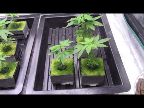 NFT HYDROPONIC WATER SYSTEM FOR CANNBIS/Marijuana