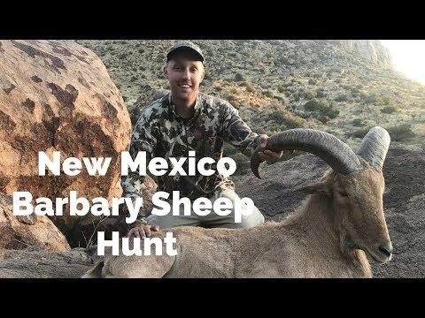 New Mexico Barbary Sheep Aoudad Hunt