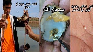 وجدنا لؤلؤه في نهر دجله المحار العراقي عجيب