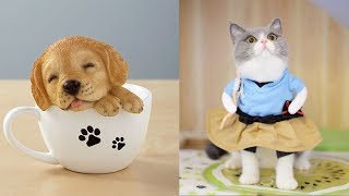 💗 Aww - Funny and Cute Pets Videos Compilation💗 #4 - Pet's Land
