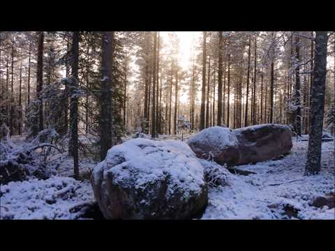 Reindeers and first snow in finnish Lapland 2017 (pictures and video)