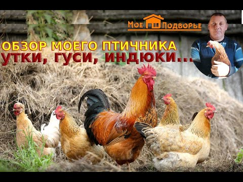 Мой птичник: обзор хозяйства//