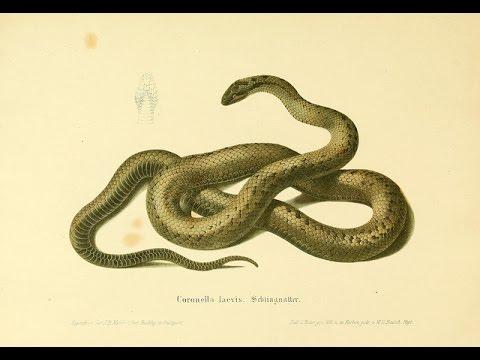 Snake Attacks - Animal Heaven
