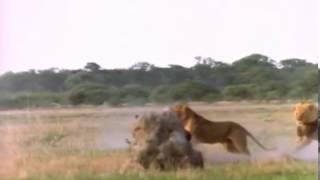 Убийство гиены