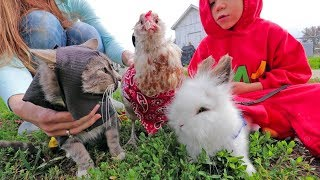 """CHICK"" OR TREAT: Halloween on the farm"