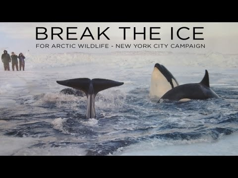 Break the Ice for Arctic Wildlife - New York City Campaign Video