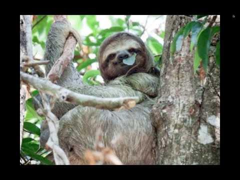 Costa Rica & Panama Webinar