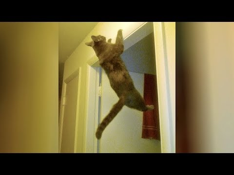It's IMPOSSIBLE TO NOT LAUGH at these FUNNY ANIMALS - Hilarious ANIMAL videos