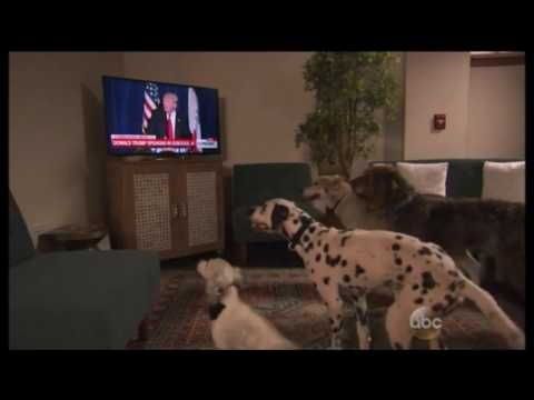 Chuck and Kelly - VIDEO: Dogs Obey President Trump, Sit on Command