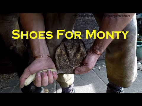 Horseshoes For Monty