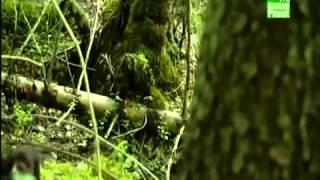 видео природа чернобыля