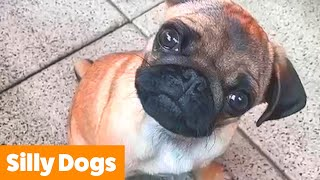 Hilarious Cute Dogs | Funny Pet Videos