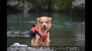 初めて訪れてみました。 ジャンプと潜水の練習ですが、ジャンプはまだま...