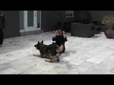 German Shepherd protects owner that falls to the floor trying to flee from an attacker!