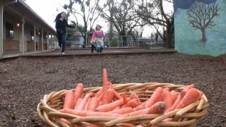 Carrots Farm to Fork: Meet California farmer Matthew Martin
