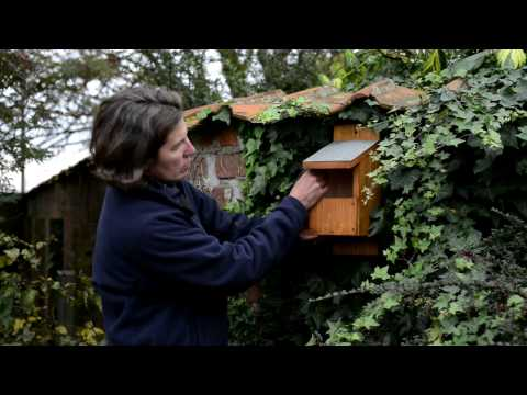 Where to site your nest boxes