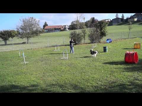 Hoopers Agility: NADACSchweiz am 16. Okt 14