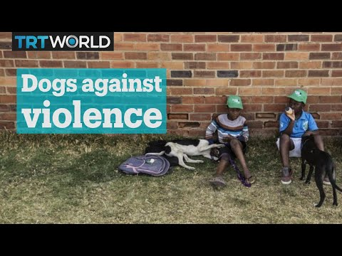 Dogs shield South African children from township violence