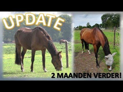 2 maanden UPDATE Vrolex   Horse Around