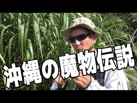 世にも恐ろしい沖縄の魔物の話