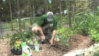 How to Plant Sweet Bell Peppers