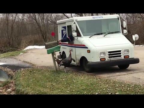 Bob Delmont - Turkey going after Mail man!