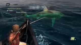 Ловля белой акулы в игре Ассасин Крид 4(Поймать белую акулу в Ассасин Крид 4 Черный флаг, не так то и просто. Даже не смотря на то, что эта рыбина не..., 2014-11-18T20:10:56.000Z)
