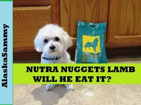 nutra-nuggets-dog-food-lamb-and-rice