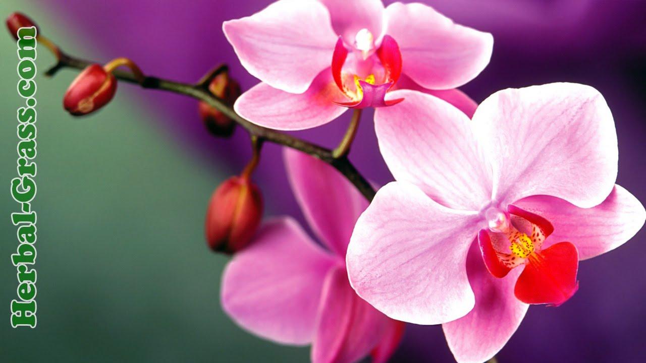 орхидеи уход в домашних условиях если опадают листья