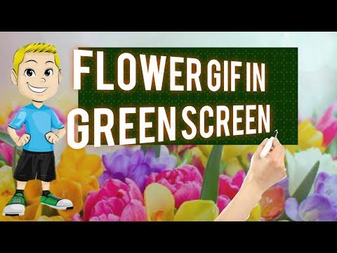Flowers 1 - green screen