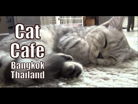 CAT CAFE IN BANGKOK | Playing with cats at the Purr Cat Cafe Club