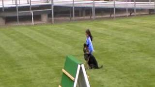 Samantha 2010 Wdc Schutzhund-obedience