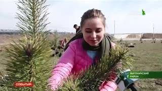 Агрохолдинг «Мираторг» высадил деревья
