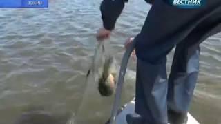 Цимлянский отдел Нижнечирской инспекции рыбоохраны: итоги октября