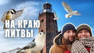 Куршский залив и 100 летняя Туя | Путешествие по Литве