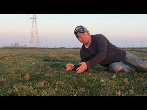 Pasture Aeration, Two Month Update