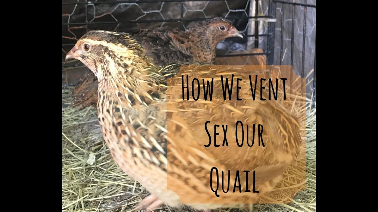 Vent sex