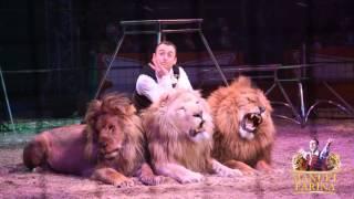 Manuel Farina  Lions & Tigers