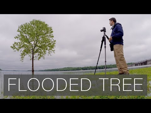 Flooded Tree Photography